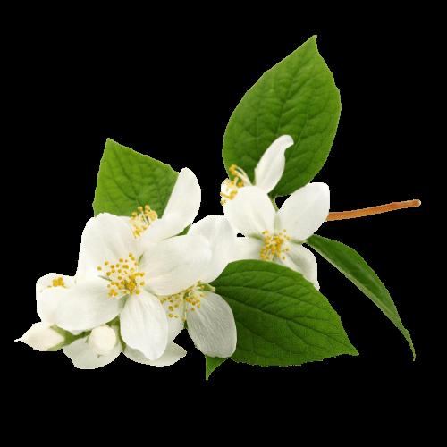 Нероли – аромат богатства